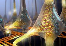 The artificial brain